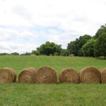 Hay bales in the field outside the studio
